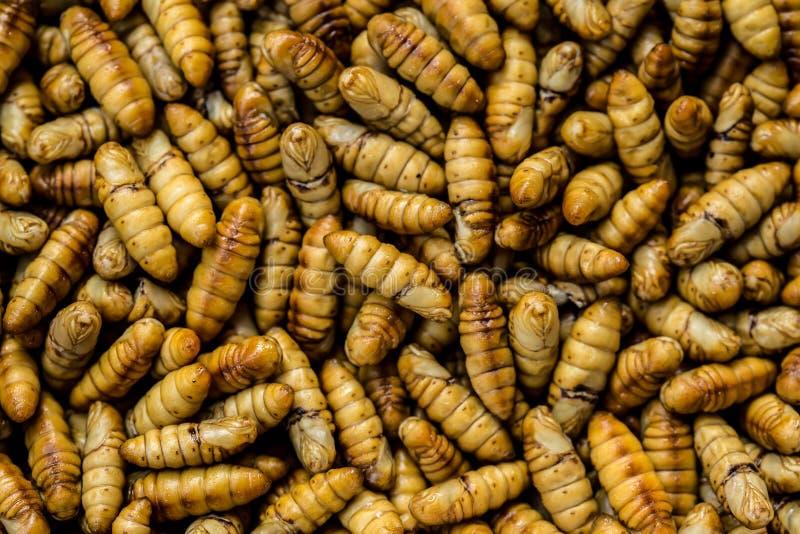 Caterpillar mealwormen, larv, avmaskar, fiskebete arkivfoton