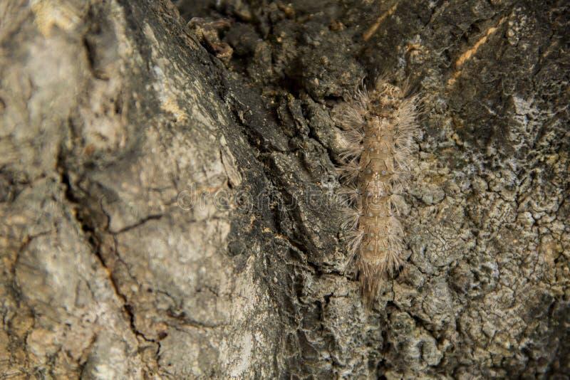 Caterpillar ostacola fotografia stock libera da diritti