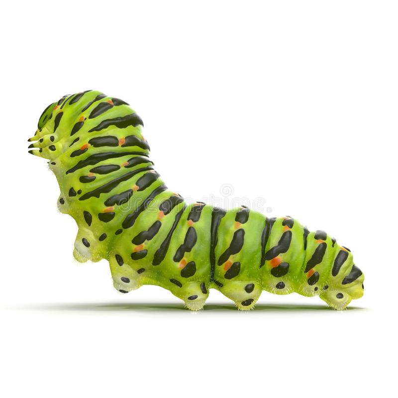 Caterpillar Papilio xuthus. Isolated on white. 3D illustration stock illustration