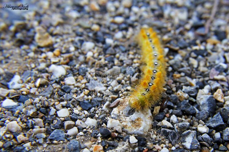 Caterpillar on pebbles royalty free stock photography