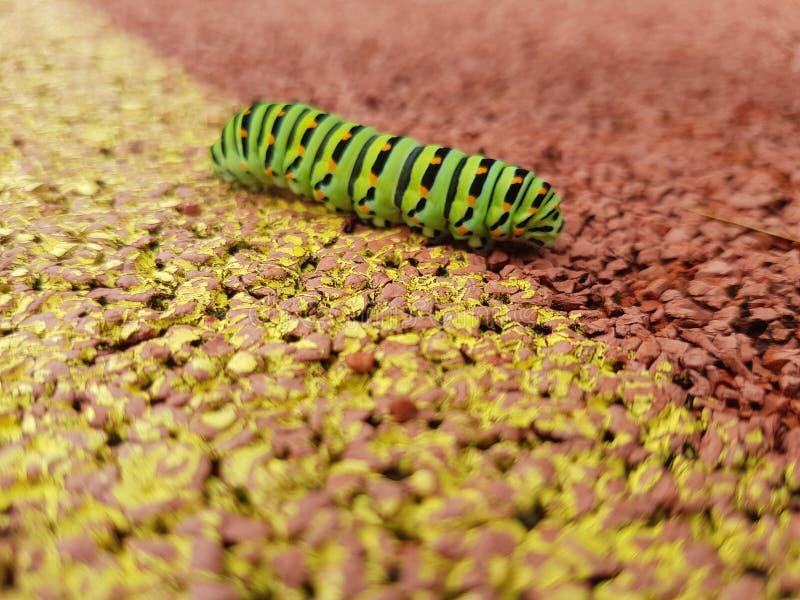 Caterpillar photo stock photos