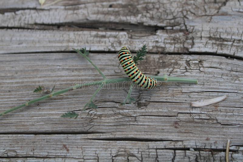 Caterpillar playing on planks and plants stock photography