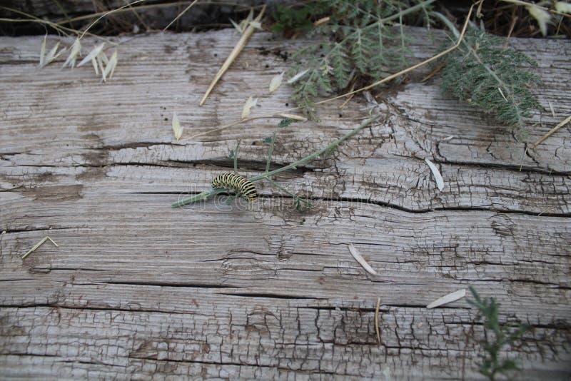 Caterpillar som spelar på plankor och växter arkivbilder