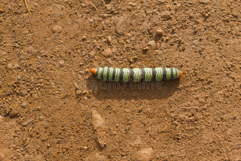 Caterpillar in strada non asfaltata fotografia stock libera da diritti