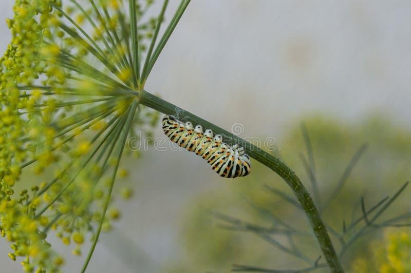 Caterpillar sulla pianta fotografia stock