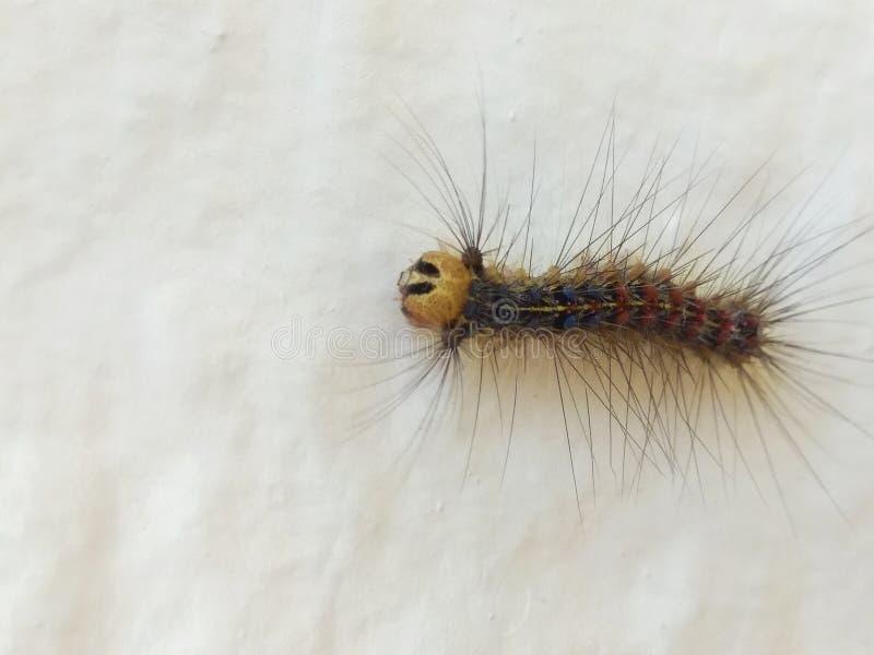 Caterpillar sur un mur blanc photographie stock libre de droits