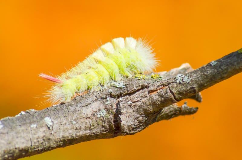 Caterpillar surmonte des obstacles photos libres de droits
