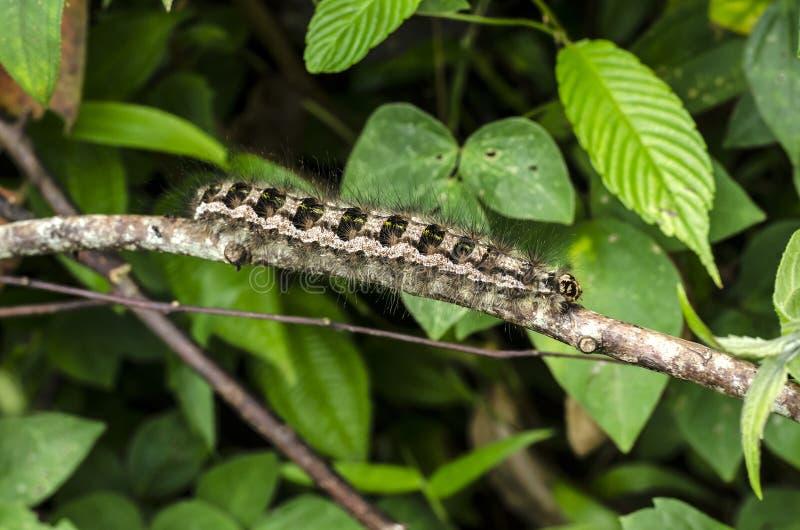 Caterpillar-tahun stockbilder