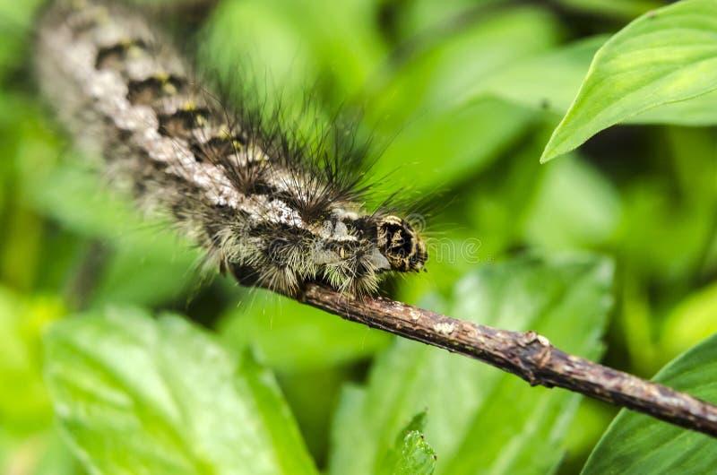 Caterpillar-tahun lizenzfreies stockfoto