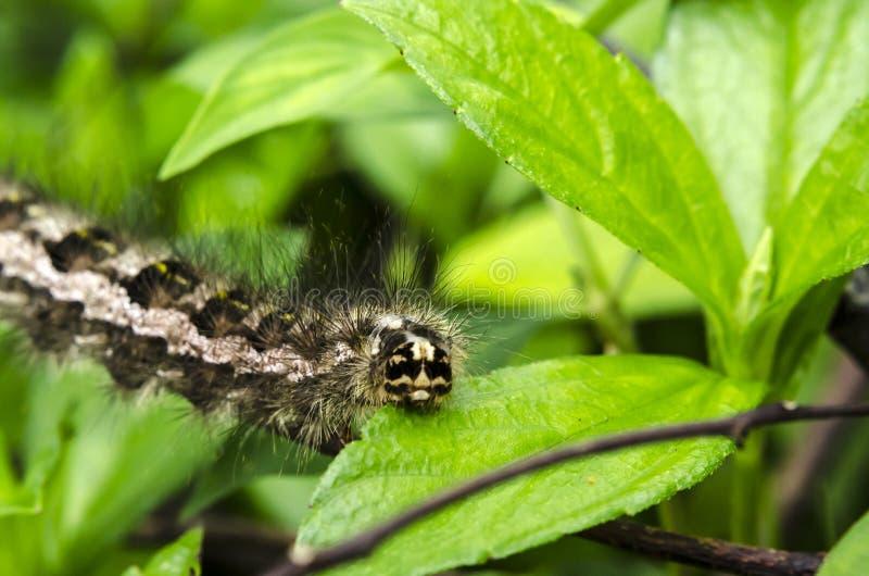 Caterpillar-tahun stockfotografie