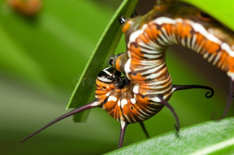 caterpillarförsvar arkivfoto