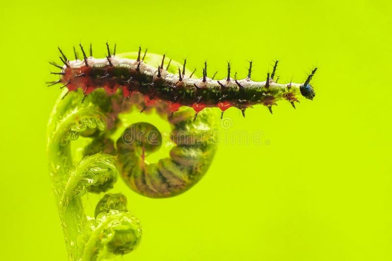 caterpillars fotografering för bildbyråer