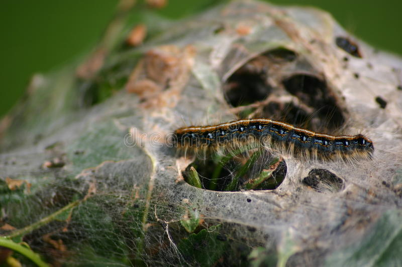 Caterpiller stock images