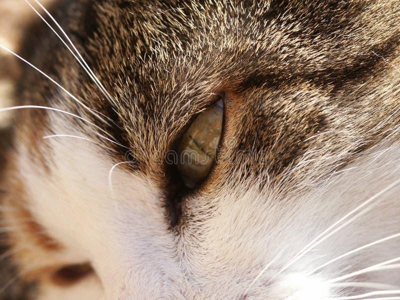 Cateye 免版税图库摄影