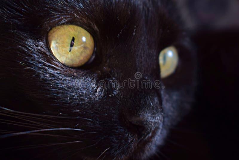 Cateye del amarillo del retrato del gato negro imagen de archivo libre de regalías