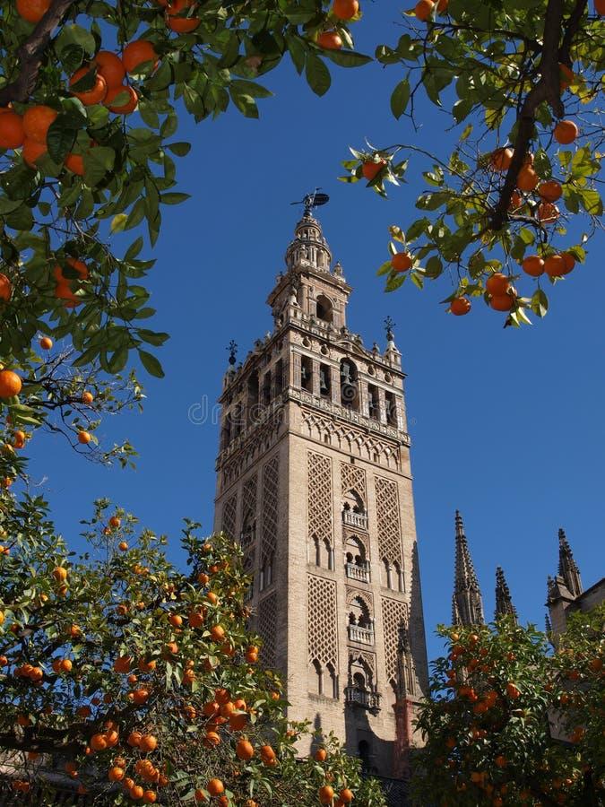 Free Cathedral Orange Trees Royalty Free Stock Image - 20523226