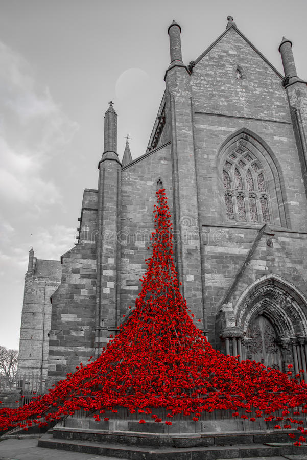 Cathedral Poppies stock photos