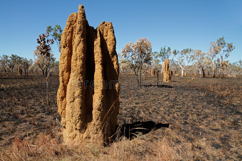 Cathedral termite mounds, Australia stock images