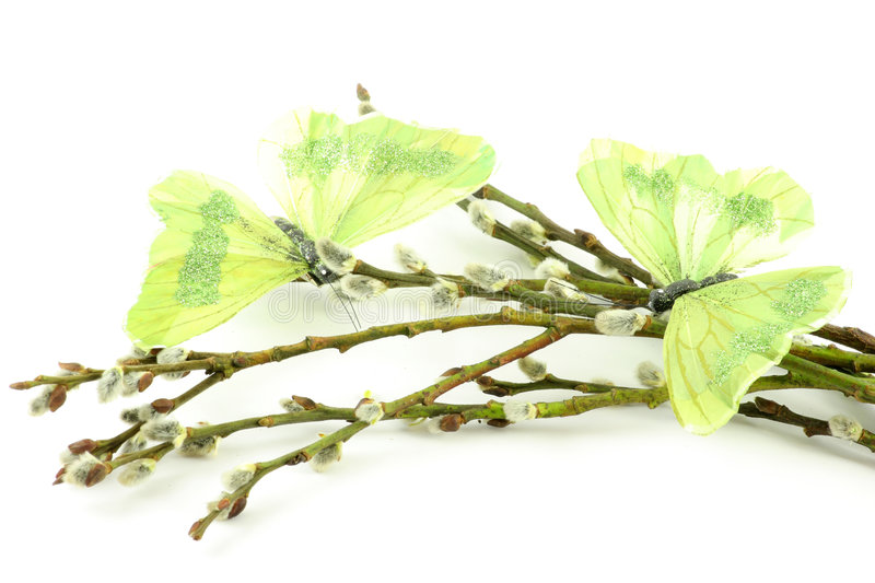 Download Catkin Sticks With Butterflys Stock Photo - Image: 8723362