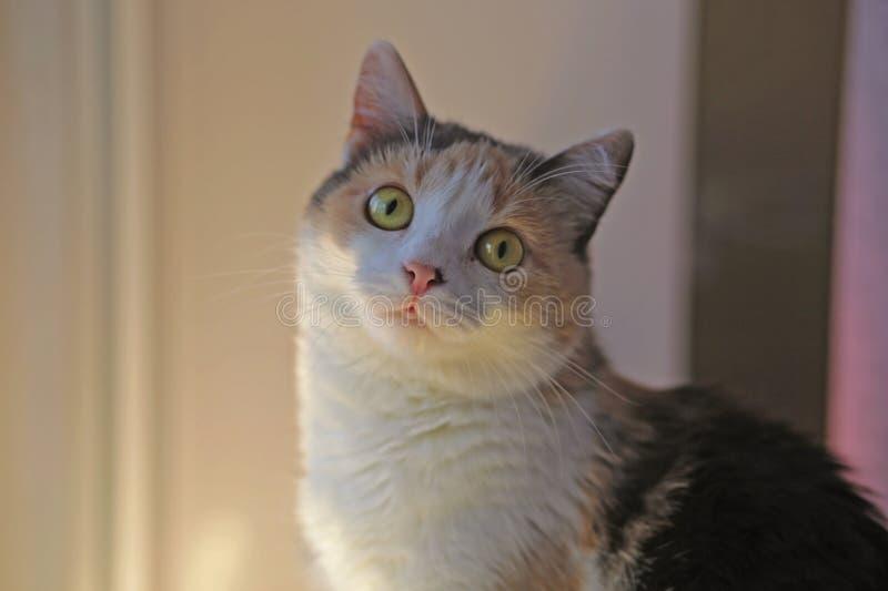 Catling сидит на аномалии окна стоковое изображение