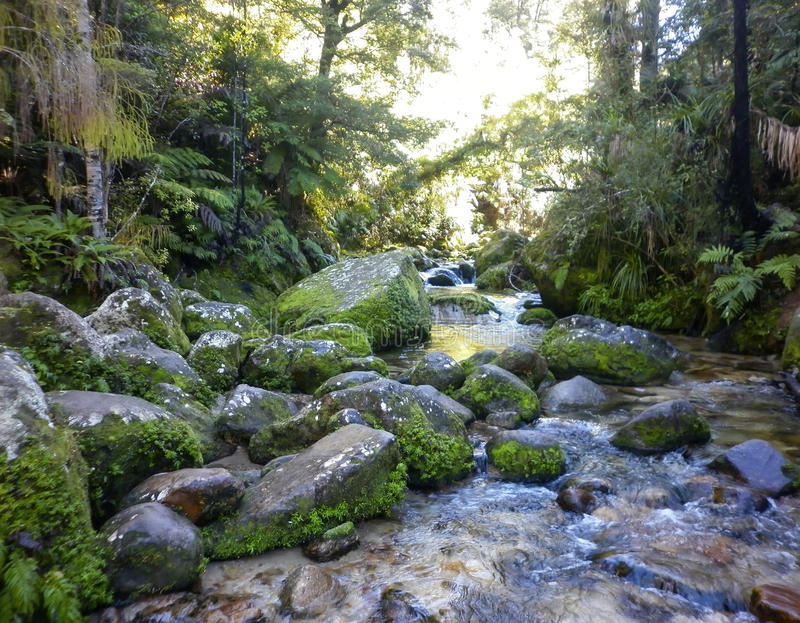 Catlins,南方,雨林,流经用不同的种类的河豪华的温和雨林蕨和树 库存图片
