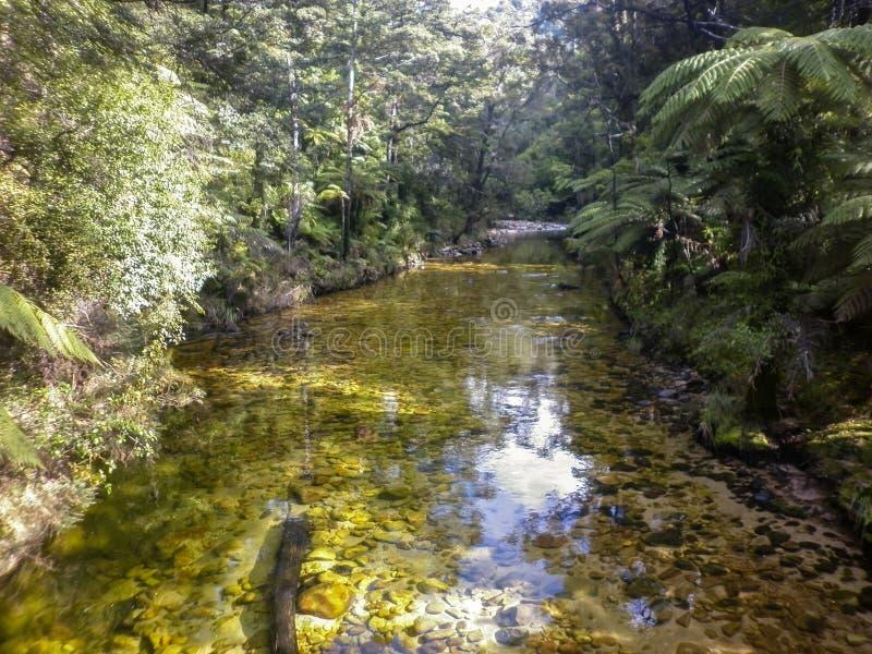 Catlins, Süden, Regenwald, Fluss, der üppigen mäßigen Regenwald mit verschiedenen Arten von Farnen und von Bäumen durchfließt stockbild