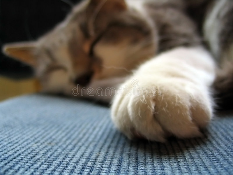 Download Catnap Stock Images - Image: 230474
