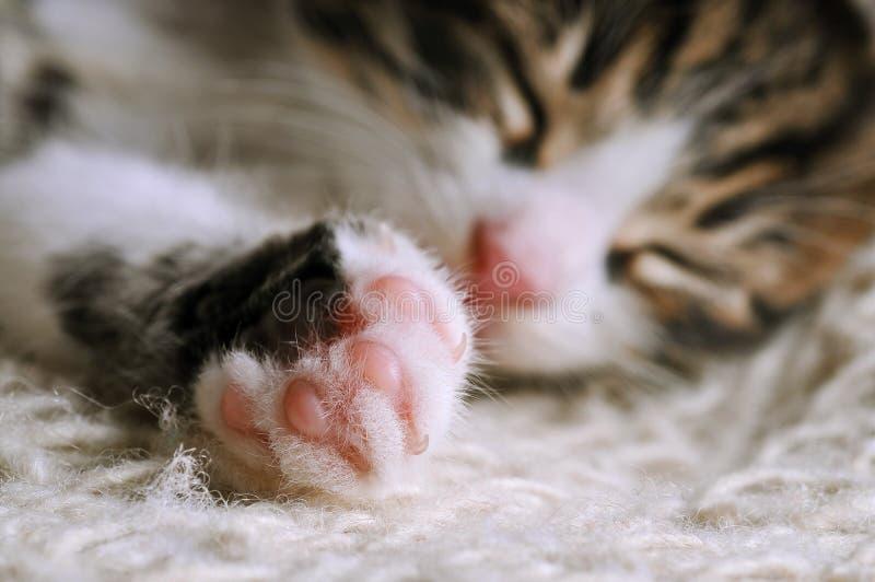 Download Catnap Stock Image - Image: 6889911