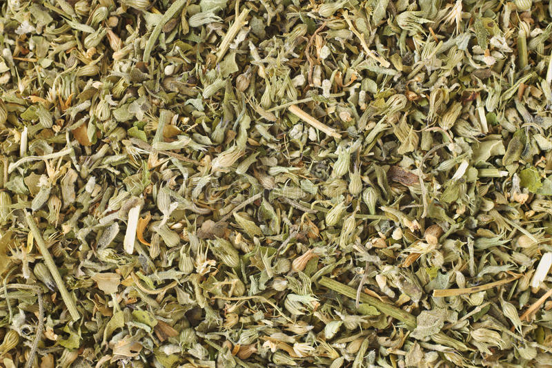 Catnip. Dried catnip or catmint can be used as a herbal tea or playful response in felines stock photo