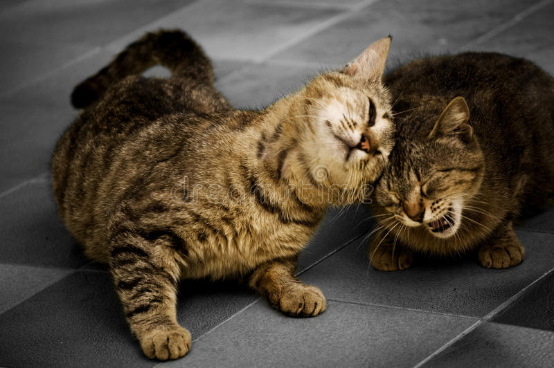 Download Cats stock photo. Image of mammal, purr, friendship, claws - 14053328