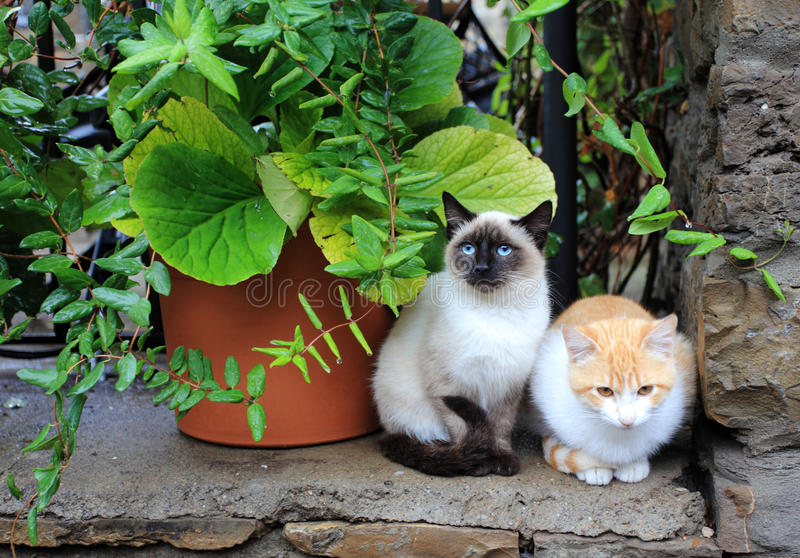 Cats. Two cats resting in a garden wall stock image