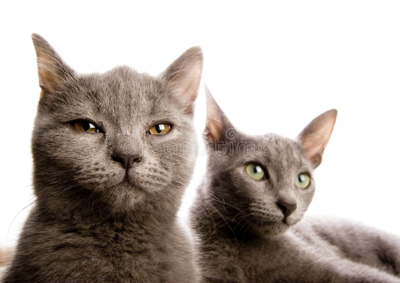 Cats. Cat - the small furry animal with four legs and a tail; people often keep cats as pets royalty free stock photography