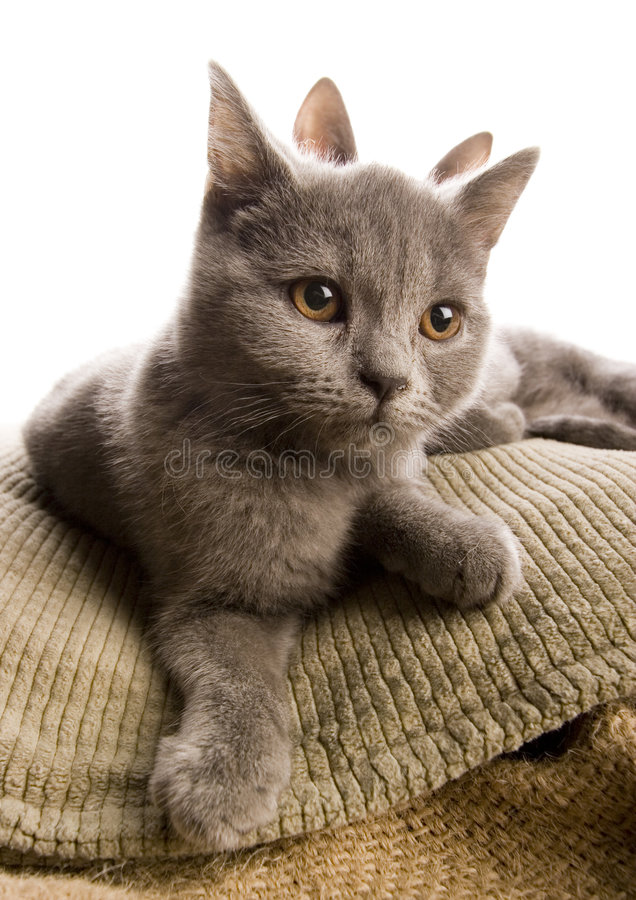 Cats. Cat - the small furry animal with four legs and a tail; people often keep cats as pets stock photos