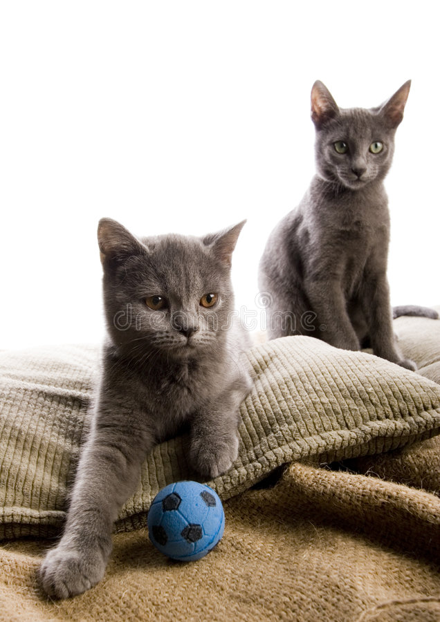 Free Cats Royalty Free Stock Image - 3603066