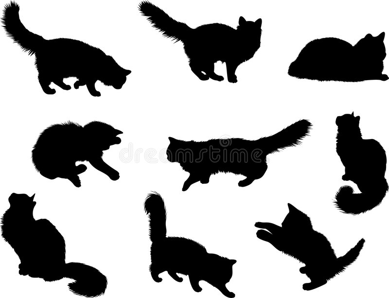 Download Cats Stock Image - Image: 5237681