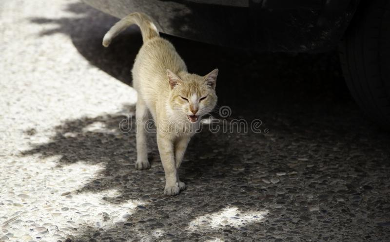 Cats abandoned street. Cats abandoned on the street, animal abuse, loneliness, stray, kitten, homeless, sad, feline, white, fur, pet, young, cute, dirty, black royalty free stock photos