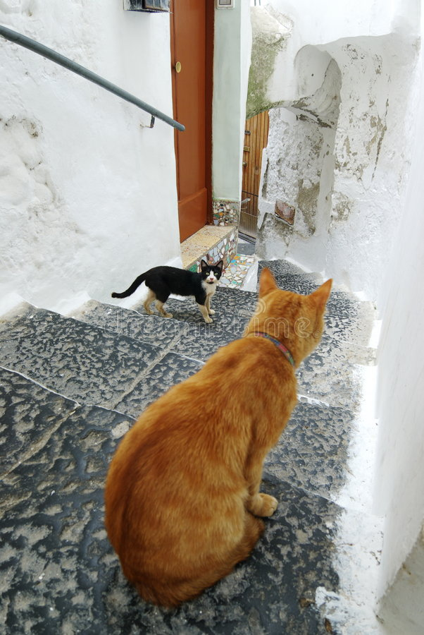 Cats in the alley Amalfi. Amalfi close of cats in the alley royalty free stock photos