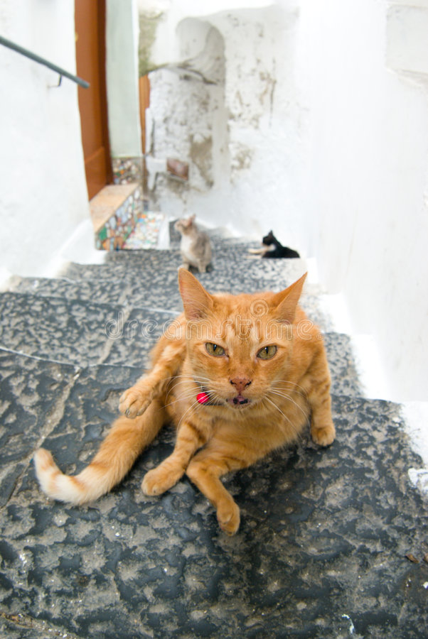 Cats in the alley of Amalfi. Looking royalty free stock image
