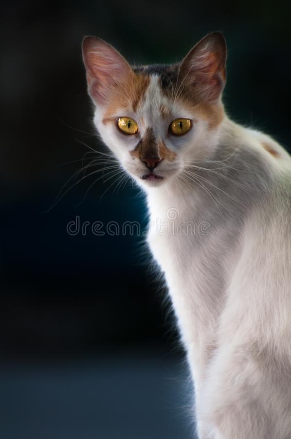 Cats, Alley Cats, Stray Cats. 