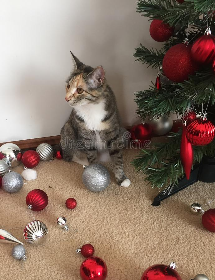 Free Cats And Christmas Trees Stock Image - 85677491
