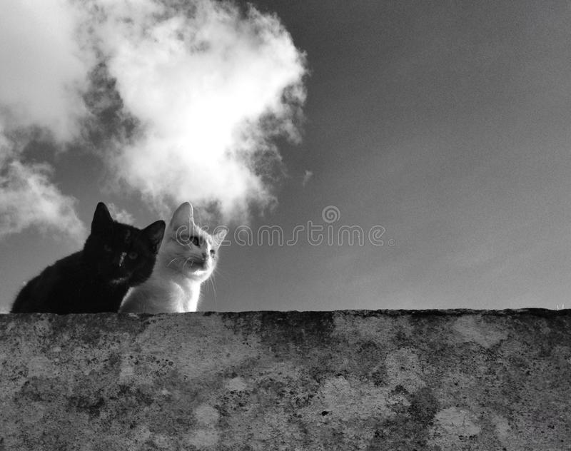 Cats. B&w animali felini gatto royalty free stock image