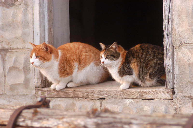 Download Cats In Barn Window Stock Image - Image: 6428041