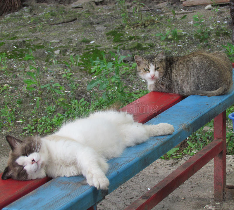 Cats on the bench. One is sleeping, another one is sitting stock images