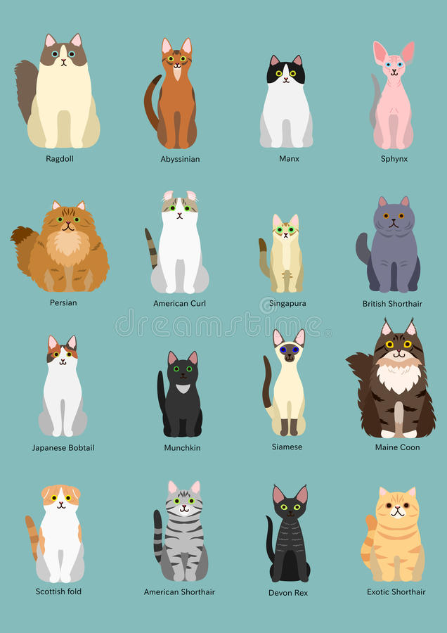 Cats breed. Set, sitting, front view royalty free illustration