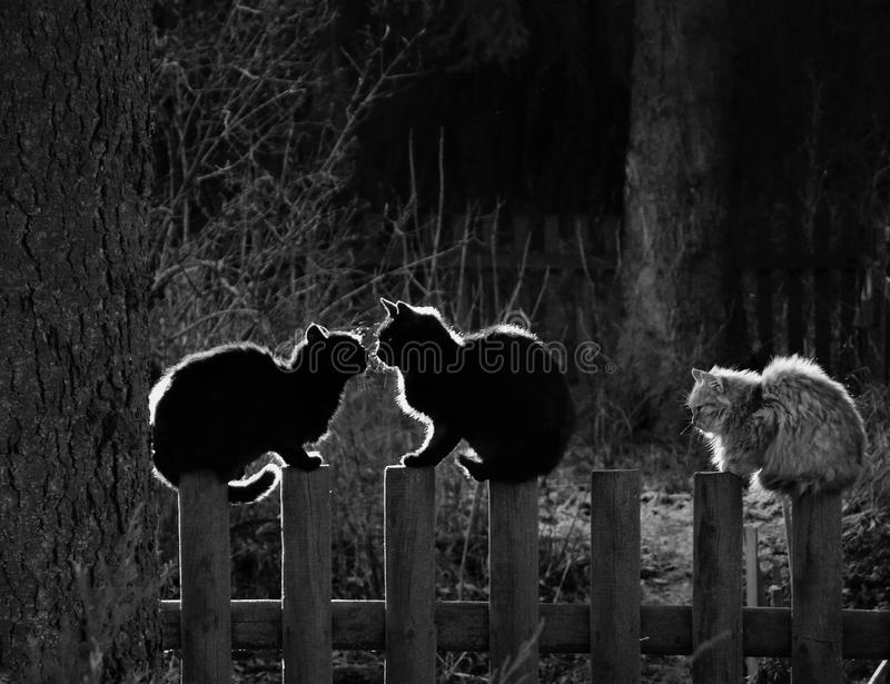 Cats. Bw, black, white, cats, cat, kitty, pet, village, czech, animals, animal world, human, photo, photohraphy, pic, day, tbt royalty free stock image