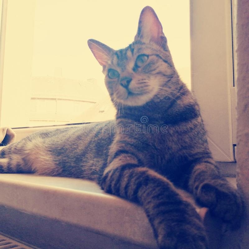 Cats chill at window stock photography