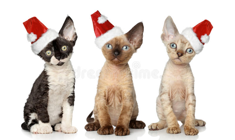 Cats in Christmas red hat stock photography