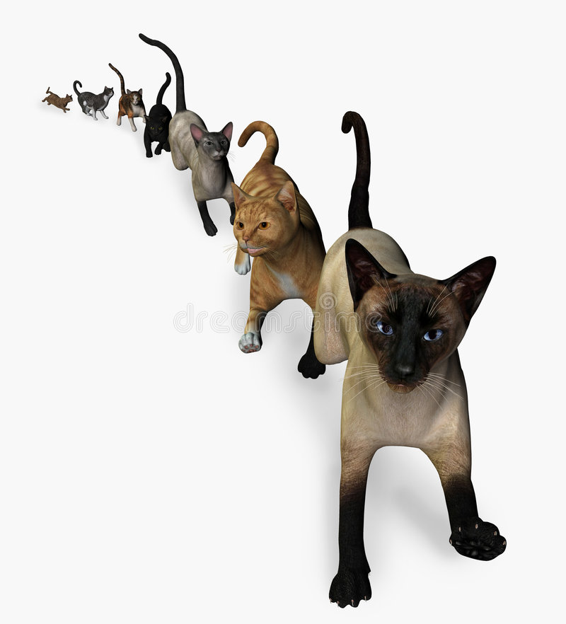 The Cats are Coming!. 3D render depicting several cats walking single file
