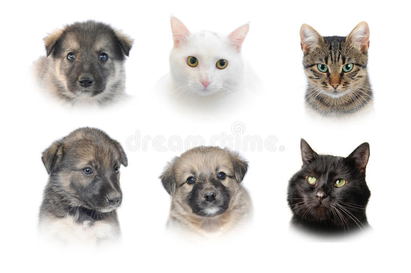Cats and dogs. Isolated portraits of cats and dogs stock image