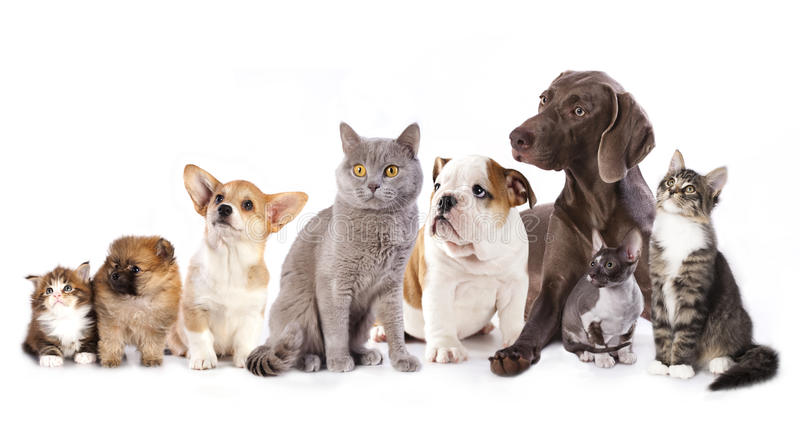 Cats and dogs. Group of cats and dogs in white background, cat and dog stock photography